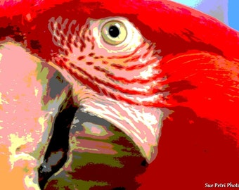 Bird Photography, Animal photography, Parrot Photos, Greenwing Macaw Close Up Photographs, Red, Color Photography