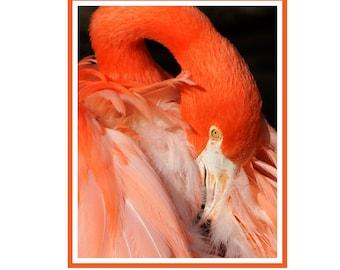 Flamingo Notecard Package of 6