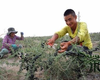 Lycium Ruthenicum Seeds, Black Chinese Wolfberry Seed, Black Fruit Wolfberry Seeds. QTY.200pcs/bag +
