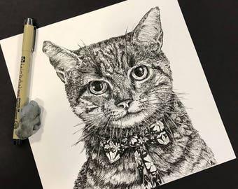 Catty Jacky