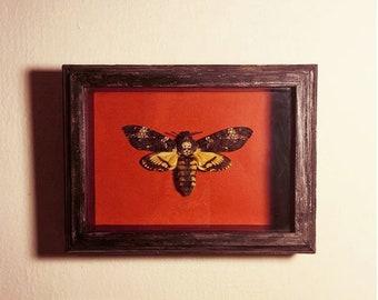 Death's Head Moth / Acherontia Atropos / Framed Moth