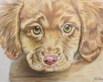 Cute Puppy Colour