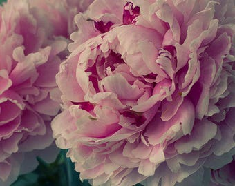 Peony Print,  Pink Flower Wall Decor, Floral Art Print, Flower Photography, Peony Wall Art, Peony Photo, Peony Artwork, Floral Art