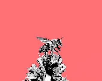 Bee Landing Pop Art Photography Print