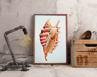 Shell watercolor painting original   A4 21 x 29,7 cm