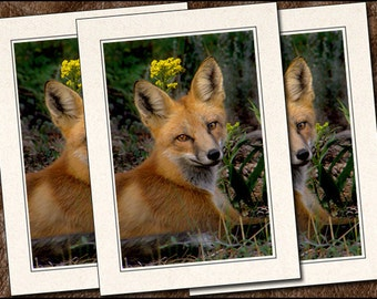 3 Fox Note Cards Handmade - Blank Note Cards With Envelopes - Fox Greeting Cards Set - Wildlife Greeting Cards Handmade- 5x7 Cards - (IN36)