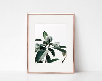 Plant Photography Print, Plant Wall Art, Minimalist Home Decor, Minimalist Wall Decor, Plant Leaves Print, Nature Photography, Nature Print
