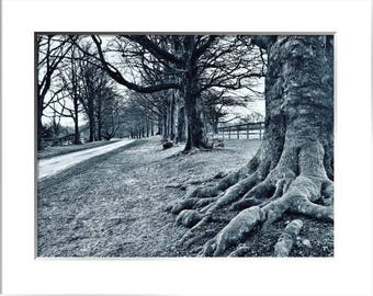 Line Of Trees, Black and White, Limited Edition Photographic Print, With Mount, Two Sizes Available, Trees, Landscape