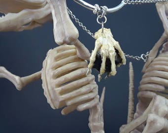 Necklace REAL bone Claw