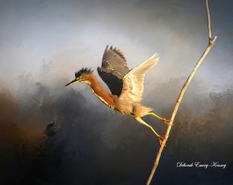 Green Heron Takes Flight