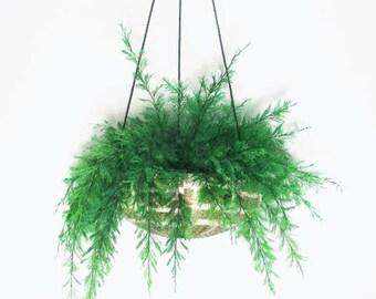 Hanging AIR FERN in Sea Urchin