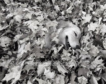 Black and White Smiling Dog Photography | Golden Retriever | Fall Leaves Wall Art | Abstract Animal Home Decor | Happy Pet | Puppy Dog Print