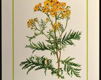 Yellow Wild Flower Wall Decor Nature Print Botanical Art