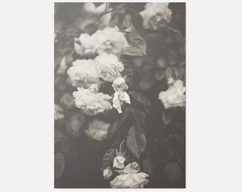 In Full Bloom No.2 - Art Print