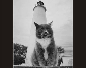 Ocracoke Island Lighthouse with kitty Photographic Print matted in black North Carolina
