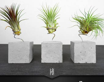 Air plant with silver wire on concrete cubes