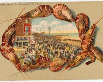 Vintage Atlantic City Postcard, Conch Shell, 1909