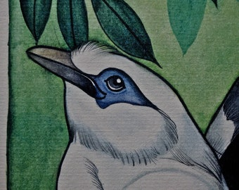 Chester Zoo charity Print 1- Bali starling and Black-winged starling.