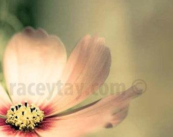 Pastel Decor, Green, Pink, Flower Photography, Shabby Chic Wall Art, Girl Nursery Decor, Pink Flower Photos