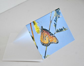 Photo Note Card Monarch Butterfly Photography Blank Card