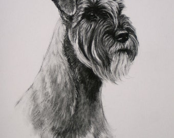 Standard Schnauzer Terrier dog dog lover gift LE print from an original charcoal drawing available unmounted or mounted ready to frame