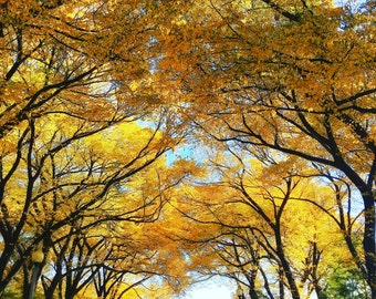 Autumn in Chicago, Landscape, Forest, Trees, Leaves, Chicago Photography, City Photography, Chicago Wall Art, Chicago Prints