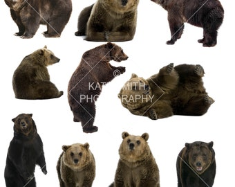 Buy 3 get one free. Brown Bear Overlays, High Resolution, Seperate PNG's, Instant Download.