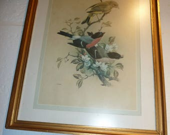 2 Paintings with birds
