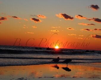 Two Birds on the Seashore, Sunset, Long Beach