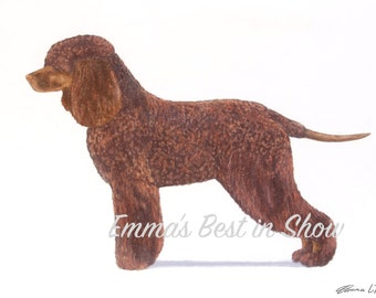Irish Water Spaniel Dog - Archival Fine Art Print - AKC Best in Show Champion - Breed Standard - Sporting Group - Original Art Print