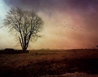 tree landscape sunset photo, birds home decor night sky, purple, pink, gold, Ontario, rural, spring zen modern art, bedroom dreamy country
