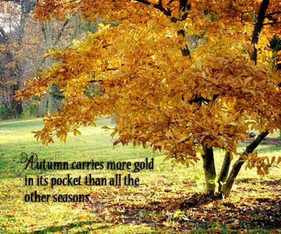 Items Similar To Autumn Landscape Photograph Orange Golden Leaves Trees  Inspirational Quote Country Russet 8x10 Green Sunny Autumn Day Crisp  Dramatic Colors ...