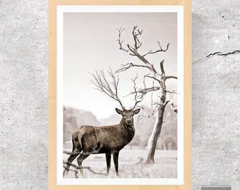 Deer Print, Deer Photo, Deer Poster, Woodland Print, Woodland Photo, Woodland Poster, Nature Print, Animal Print, Deer, Printable Download