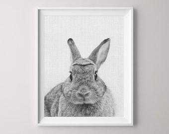 Animal Printable, Rabbit, Canvas Pictures, Canvas Print, Bunny Rabbit Art, Nursery Print, Peekaboo Animals, Nursery Animal Print, Bunny
