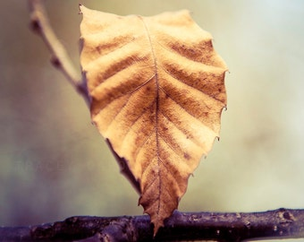 Leaf Photography, Autumn Wall Art, Prints for Walls, Photo Gifts - Nature Photograph, Indigo Blue, Light Brown, Rustic Decor, Fall Leaves