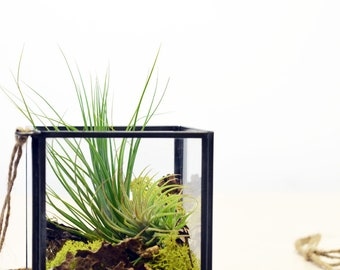 Geometric Air Plant Terrarium// Cube// Hanging String Garden// Green Gift