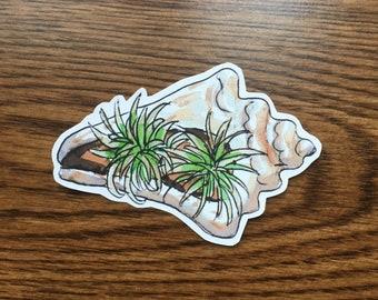 Airplant in Seashell Vinyl Sticker, Airplant Laptop Sticker