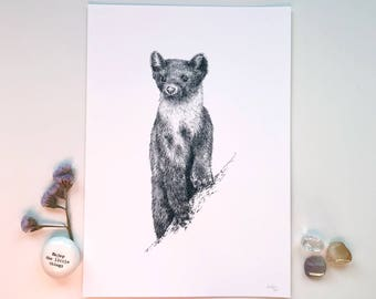 Scottish Pine Marten Fine Art Giclee Print A4