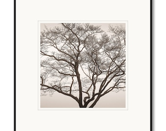 Dogwood tree in fog, Blue Ridge Parkway, Shenandoah, photography, black and white, sepia warm tone, framed photography, framed artwork
