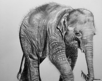 Baby Elephant, PRINT, Drawing, Home Decor, Wall Art, Elephant Art, Baby room decor, baby Nursery decor, FREE Shipping