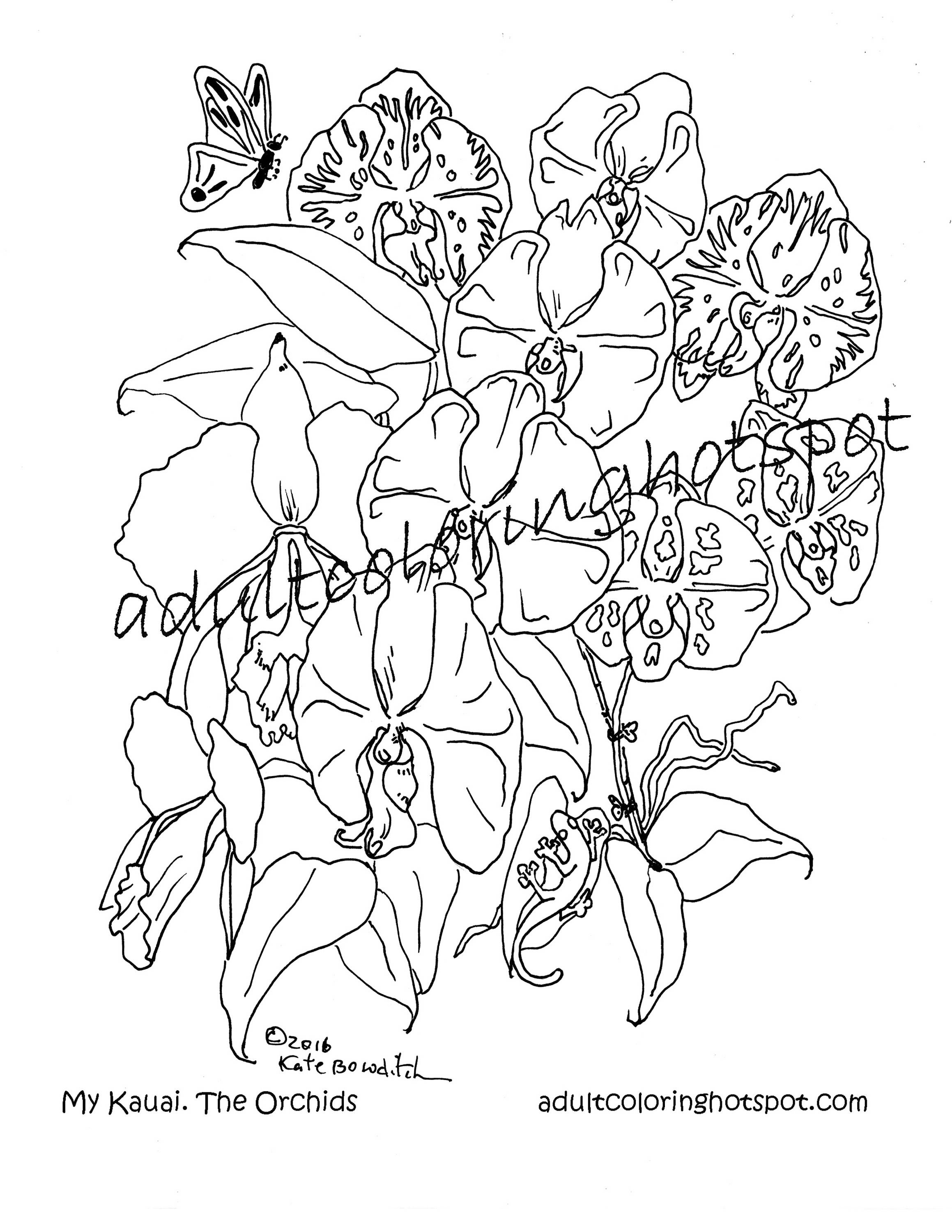 Coloring Pages Kauai Orchids