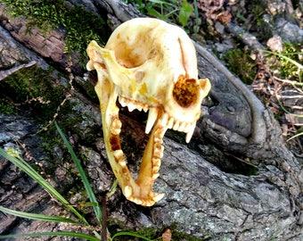 Resin Raccoon Skull Replica