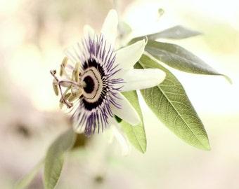 "Botanical Print - Passionflower - Flower Photograph - Bedroom Wall Art - Purple Green Wall Art - Passiflora - Floral Wall Art ""Morning Star"""