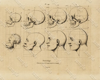 Antique Original Engraving  Human physiology Human Heads -   Human Anatomy -  Human Skulls
