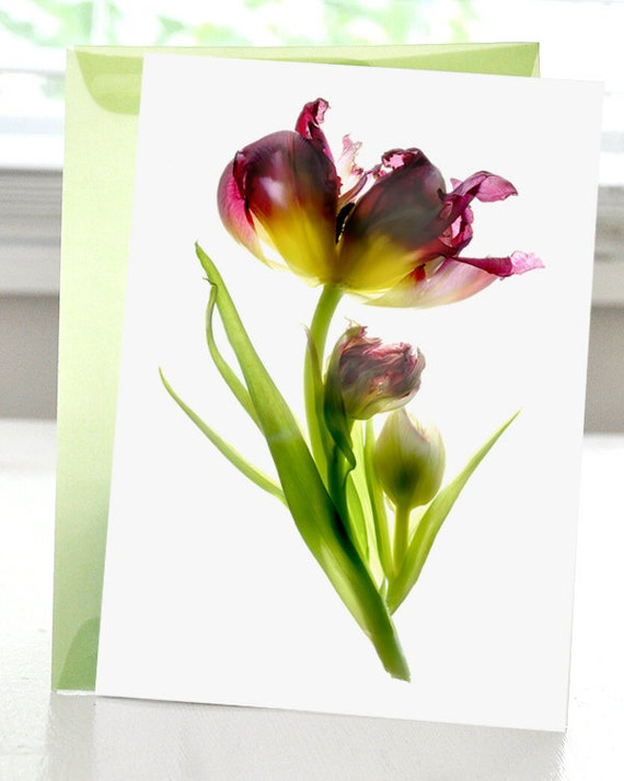 Greeting Card Note Card Tulip Dance Flower Purple