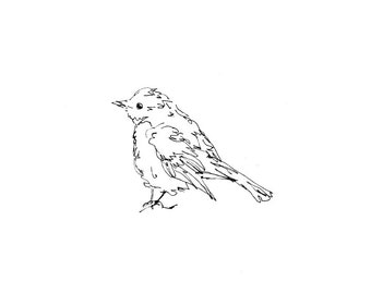 Bird Art - Giclee Print - Warbler, songbird, line drawing, pen ink