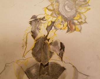 A Promised Sunflower Forgotten