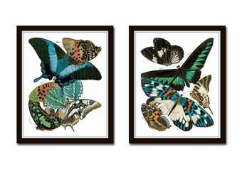 Art Nouveau Butterfly Print Set No. 30, Butterfly Prints, Scientific Illustration, Wall Art, Prints, Giclee, Print Set, Insect Art