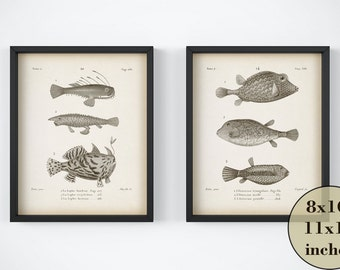 Vintage print, Instant download antique print, Nautical art, Fish wall art, Printable set of 2 prints, Fish illustration, 8x10, 11x14 Art