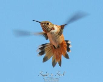 Hummingbird Art, bird lover gift, humming bird photography, animal photo, flying bird wall art print